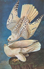PDMP Gallery Bird Print: White Doves